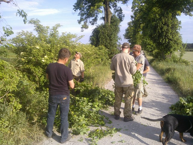 KL Daniel w Lesnie - Lisciarka 2015-06 05