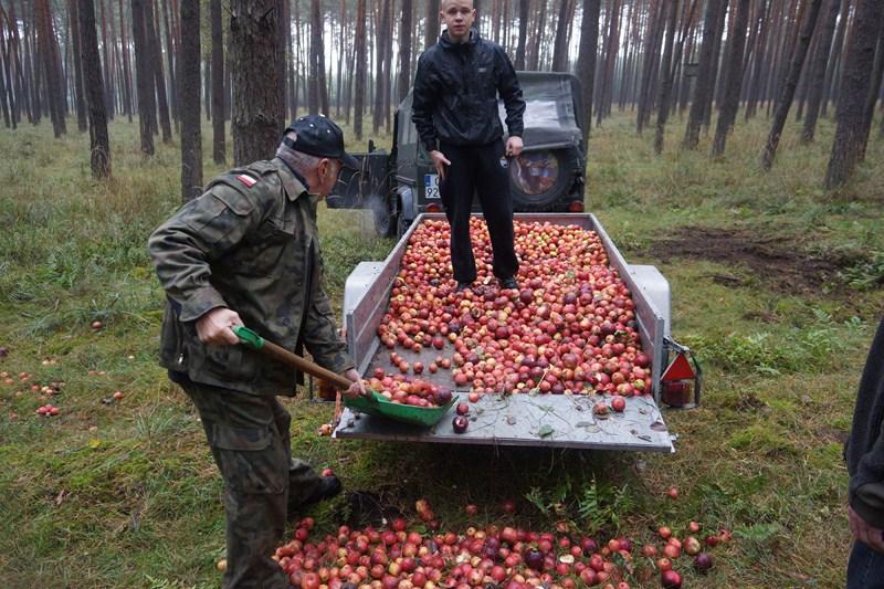 KL Daniel w Lesnie - Jablka 2012 01