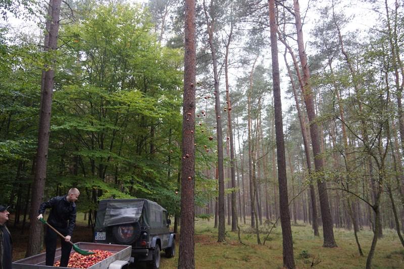 KL Daniel w Lesnie - Jablka 2012 04