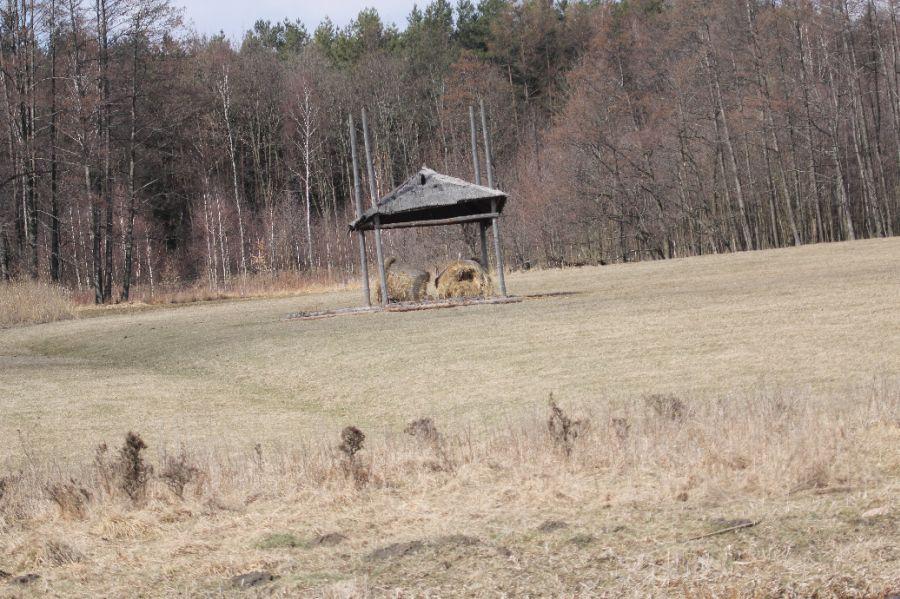 KL Daniel w Lesnie - Kaczki 2012 31