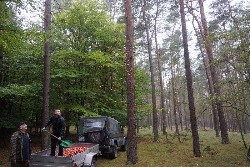 KL Daniel w Lesnie - Jablka 2012 05